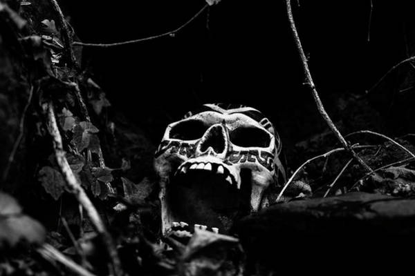 Wall Art - Photograph - Scream In The Night by Betty Depee