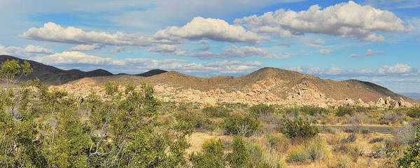 Photograph - Scrub And Rocks by Paulette B Wright
