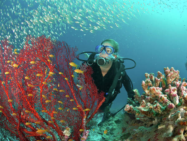 Underwater Photograph - Scuba Diver Admires Fish And Red Fan by Rainervonbrandis