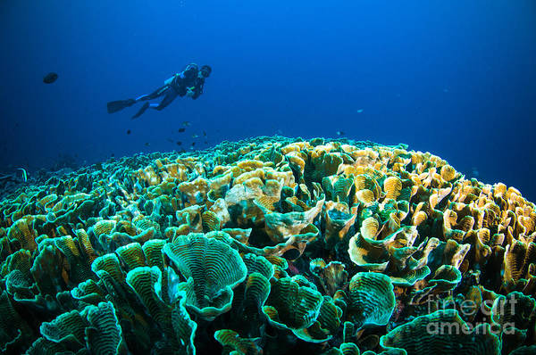 Wall Art - Photograph - Scuba Diving Above Coral Below Boat by Fenkieandreas