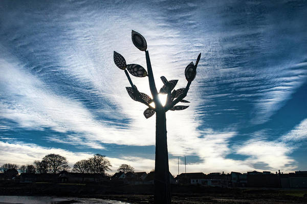 Photograph - Sculpture In Backlight by Kim Lessel