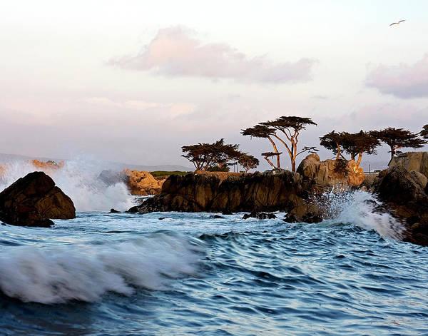 Monterey Cypress Photograph - Coastal Glow by TB Sojka