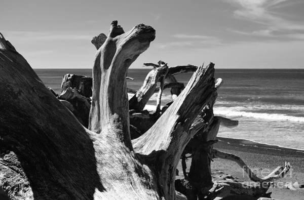 Photograph - Sea Bones by Jeni Gray