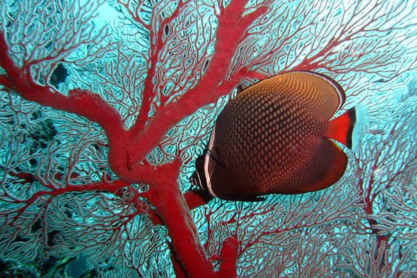 Wall Art - Photograph - Sea Fan And Butterflyfish by Takau99
