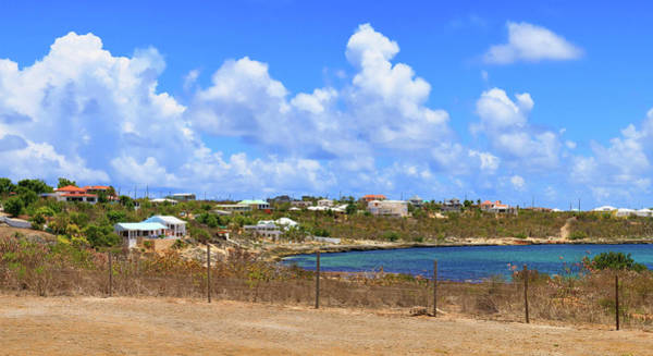 Photograph - Sea Feathers On A Beautiful Day In Anguilla by Ola Allen