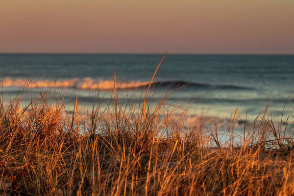 Photograph - Sea Grass At Assateague Island National Seashore by William Dickman