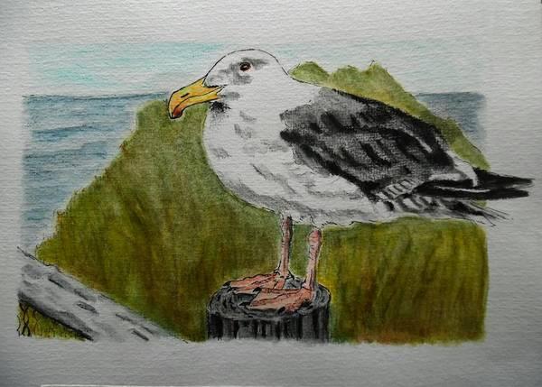 Wall Art - Drawing - Sea Gull by ILona Halderman