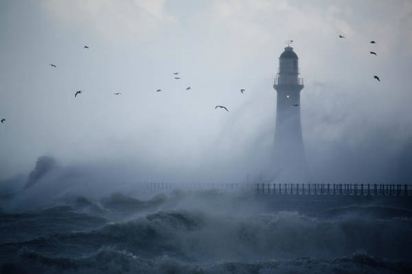 Sunderland Wall Art - Photograph - Sea Gulls Fly As Waves Hit The by Roger Coulam