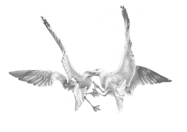 Black Drawing - Sea-gulls by Volha Drapeza