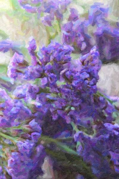 Plumbaginaceae Photograph - Sea Lavenders 6 by Cathy Lindsey