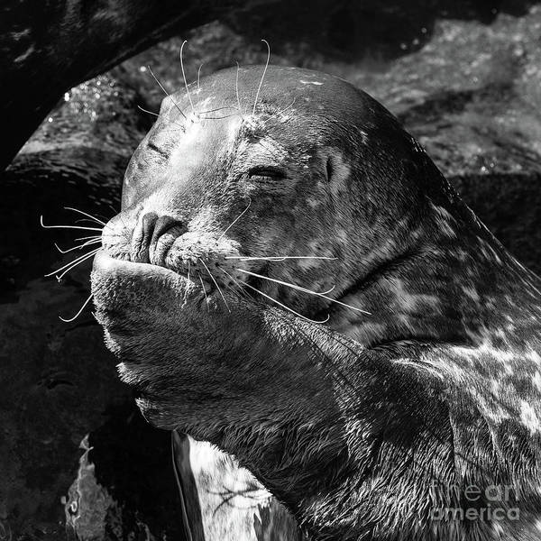 Wall Art - Photograph - Sea Lion Pup by Edward Fielding