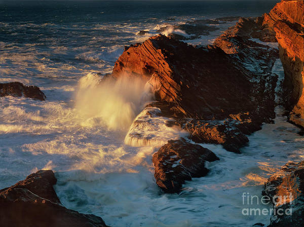 Photograph - Sea Mount At Sunset Oregon Coast by Dave Welling