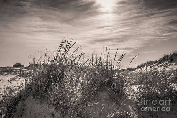 Wall Art - Photograph - Sea Oats And Sand Dunes  by Colleen Kammerer