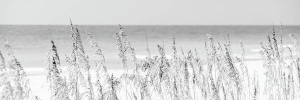 Wall Art - Photograph - Sea Oats Beach Grass Florida Black And White Panorama Photo by Paul Velgos