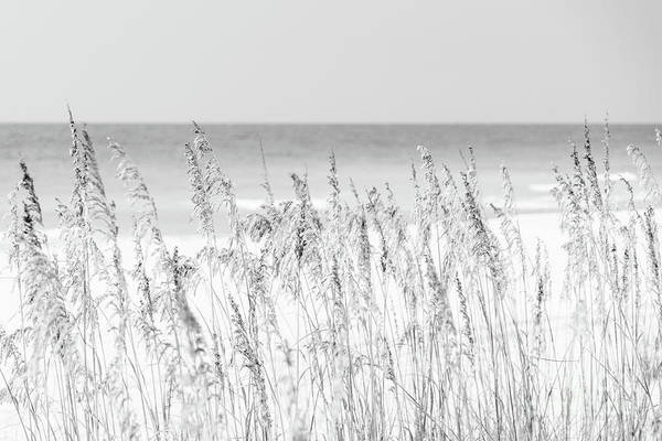 Wall Art - Photograph - Sea Oats Beach Grass Florida Black And White Photo by Paul Velgos