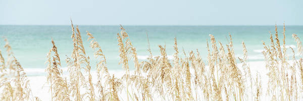Wall Art - Photograph - Sea Oats Beach Grass Pensacola Florida Panorama Photo by Paul Velgos