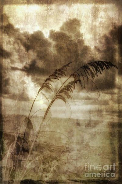 Wall Art - Photograph - Sea Oats In The Sun Fx by Dan Carmichael