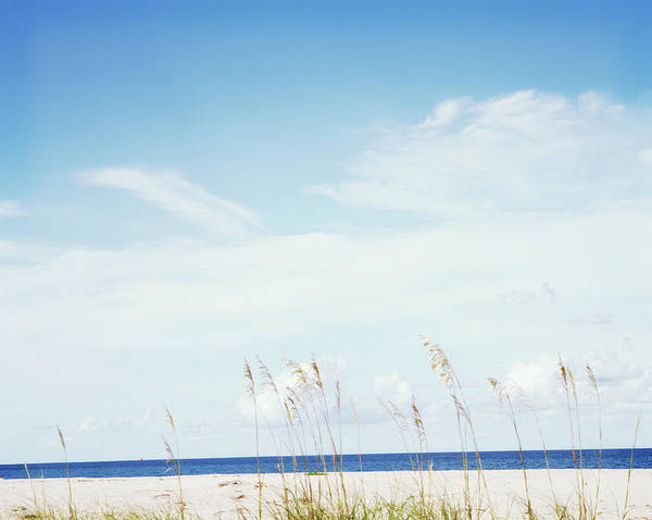 Palm Beach Photograph - Sea Oats On Beach by Thomas Werner