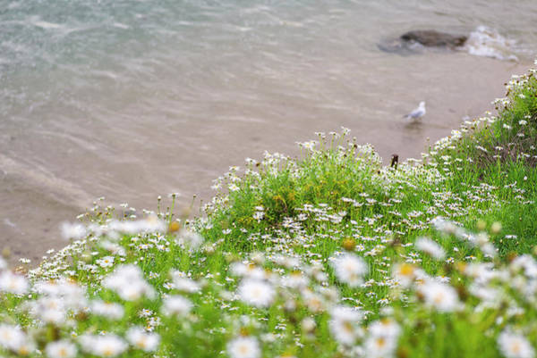 Wall Art - Photograph - Sea Of Flowers Above The Sea by Joseph S Giacalone