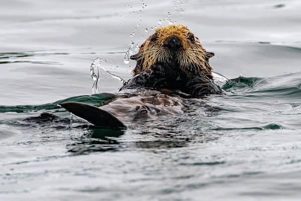 Photograph - Sea Otter In Kodiak Harbor by Mark Hunter