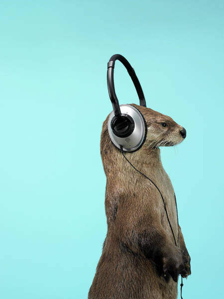 Photograph - Sea Otter Listening To Headphones by Andy Reynolds