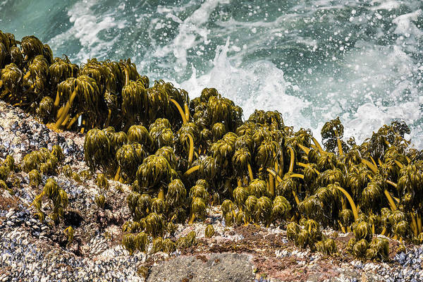 Photograph - Sea Palms And Surf by Robert Potts