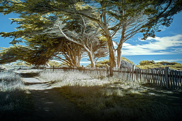 Photograph - Sea Ranch Coastline by Jon Glaser