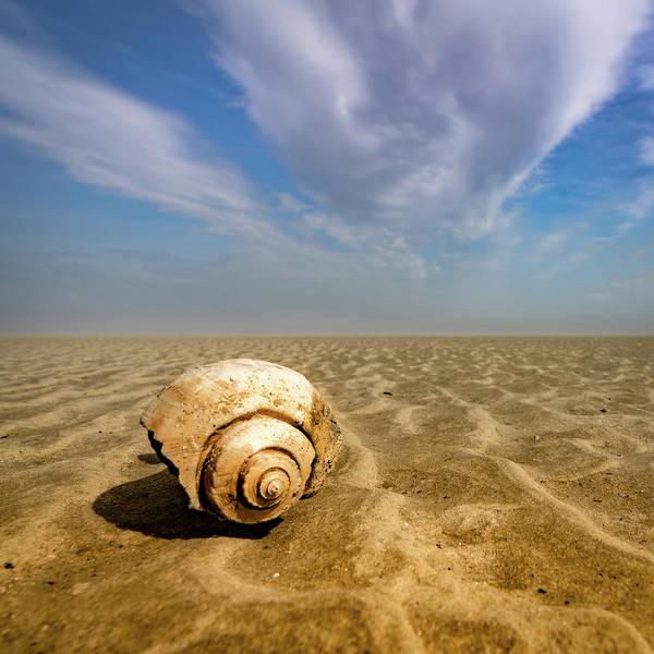 Photograph - Sea Shell by Joye Ardyn Durham