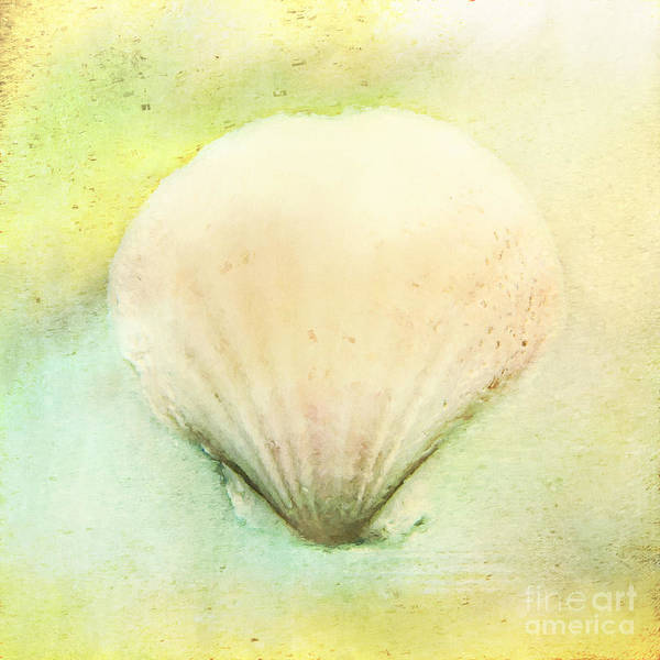 Photograph - Sea Shell by Pam  Holdsworth