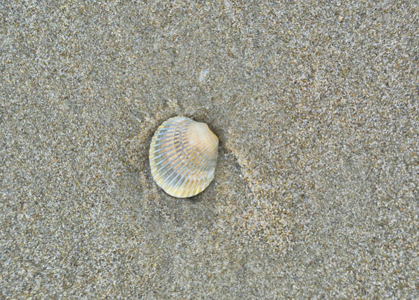 Photograph - Sea Shell Sally by JAMART Photography