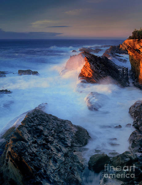 Photograph - Sea Stacks At Sunset Shore Acres Oregon by Dave Welling