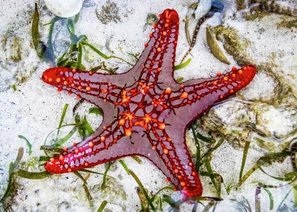 Photograph - Starfish, Zanzibar, Tanzania by Lyl Dil Creations