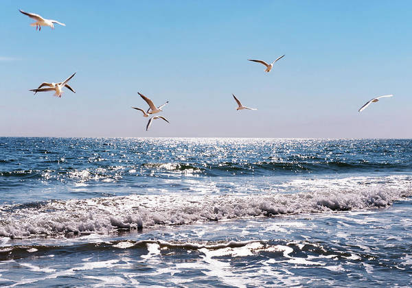 Wall Art - Photograph - Sea by Swetta