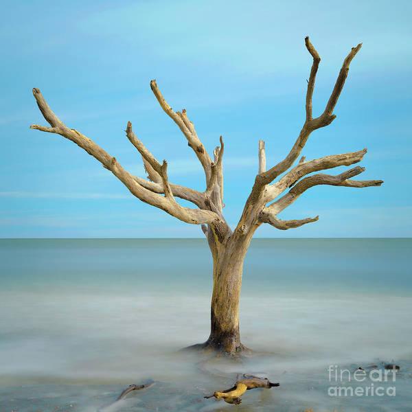 Photograph - Sea Tree by Patrick M Lynch
