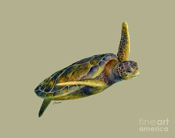 Close-up Painting - Sea Turtle 2 - Solid Background by Hailey E Herrera