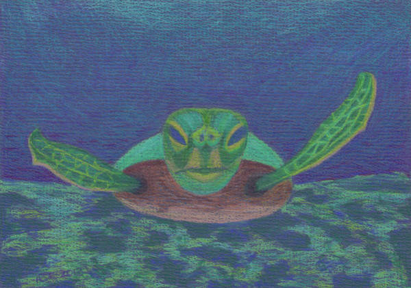 Drawing - Sea Turtle by Anne Katzeff