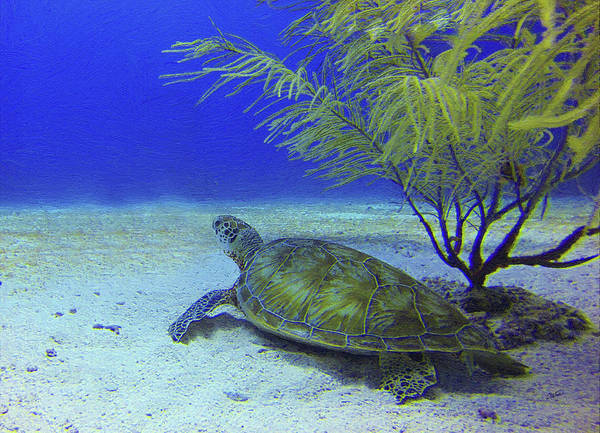 Painting - Sea Turtle Off Mexican Coast - Dwp549369 by Dean Wittle
