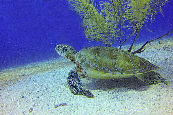 Painting - Sea Turtle Off Mexican Coast - Dwp588497 by Dean Wittle