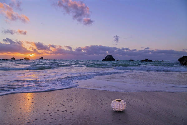 Wall Art - Photograph - Sea Urchin Sunrise Bermuda by Betsy Knapp