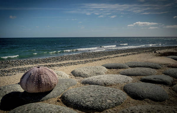 Photograph - Sea Urchin View by Jean Noren