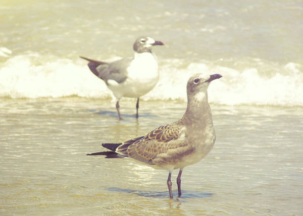 Photograph - Seabirds View by JAMART Photography