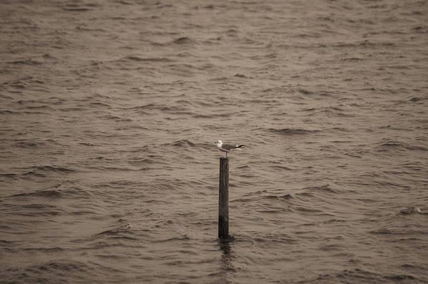 Photograph - Seagul On Piller by Dan Urban