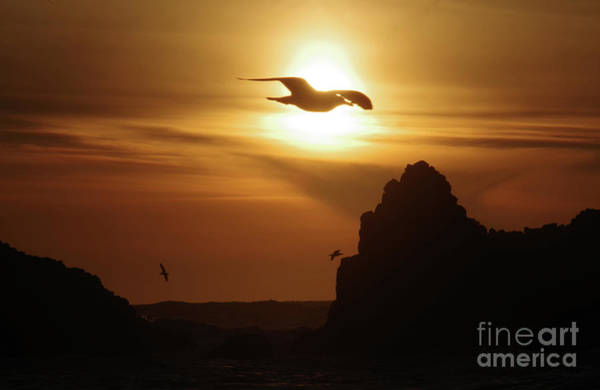 Wall Art - Photograph - Seagull And Ocean Sunset by Jeff Swan