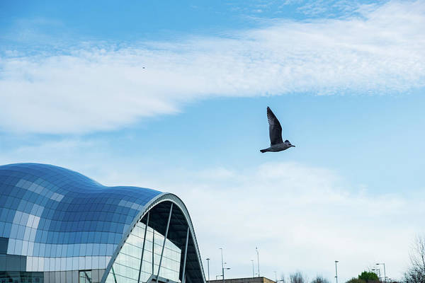 Photograph - Seagull And Sage Gateshead Elegance by Iordanis Pallikaras