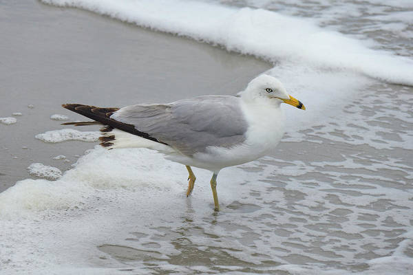 Photograph - Seagull And Sea Foam by Cate Franklyn