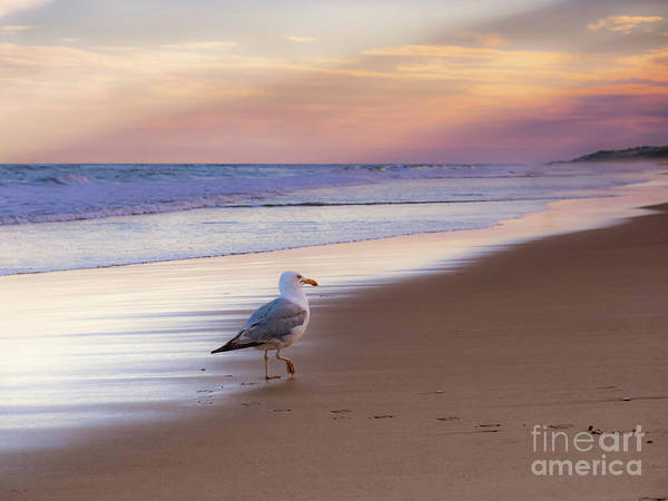 Photograph - Seagull Crossing In Ny by Alissa Beth Photography