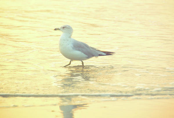 Photograph - Seagull Dance by JAMART Photography