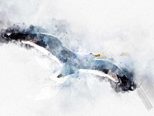 Digital Art - Seagull In Flight In The Argentine Patagonia - Watercolor Effect by Fine Art Photography Prints By Eduardo Accorinti