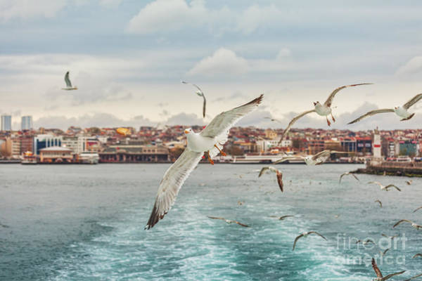 Wall Art - Photograph - Seagull Istanbul, Bosporus, Turkey by Primephoto