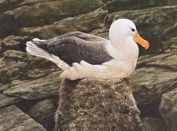 Painting - Seagull On Nest By Alan M Hunt by Alan M Hunt